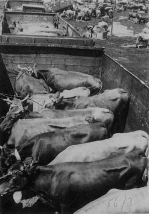 """Акція """"ВІСЛА"""" 28 квітня – 28 липня 1947 р."""
